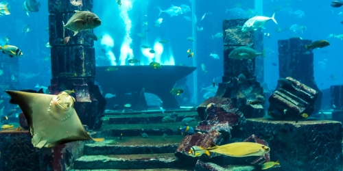 На дне океана обнаружено неизвестное науке существо
