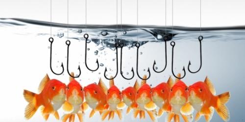 Рыбные места: как и где Москва проведет «Рыбную неделю»