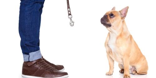 Теперь на портале открытых данных можно узнать где выгулять собаку